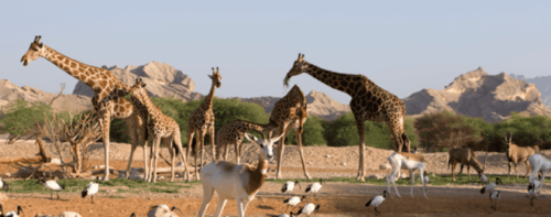 Assets & Facilities Maintenance Management for the Zoo & Aquarium Public Institution in Al Ain, UAE.